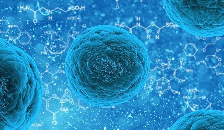 regenerative-medecine Des cellules souches survivent 17 jours après la mort – Nature Communications – 12 juin 2015