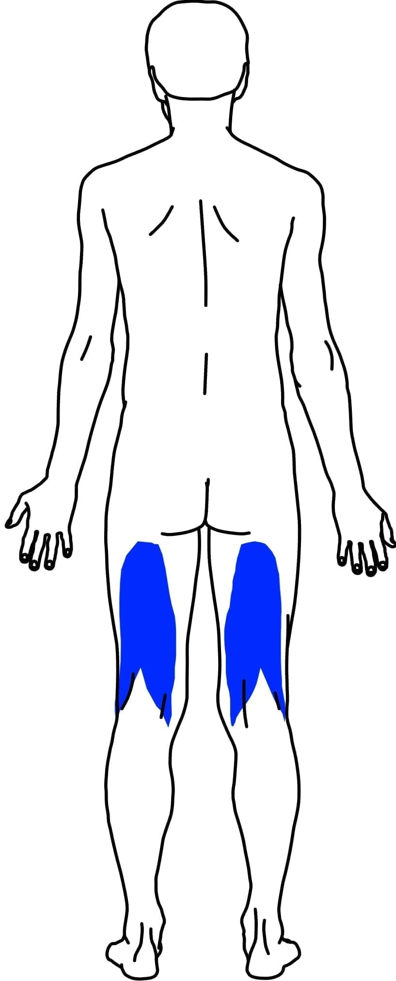 Hamstring muscles on the human body